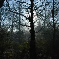 tegenlicht grillige boom