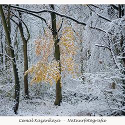 Winter (10 - 12 - 2017)