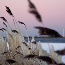 Winters veluwemeer