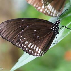 vlindertuin emmen