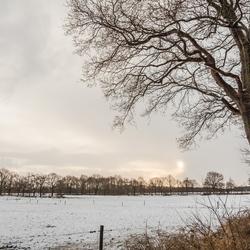 Winter in Vries - met boom