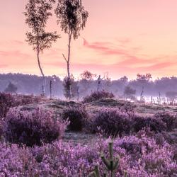 Mane Silentium XII Kalmthoutse Heide, Belgium.