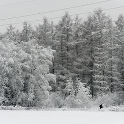 Elektriciteitsmasten met sneeuw - 2
