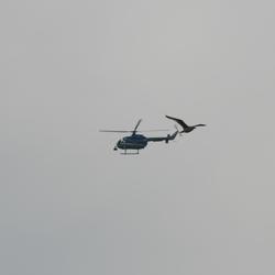 Helicopter en vogel