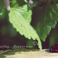 ladybug, ladybug ... fly away home.
