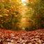 écht herfst