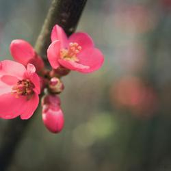 De lente ontluikt