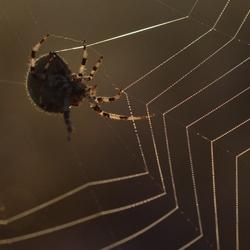 vandaag maak ik een parelweb..