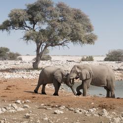 moederliefde in namibië