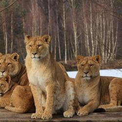 Mooie groep.