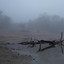 Moerputten Dorst in de mist
