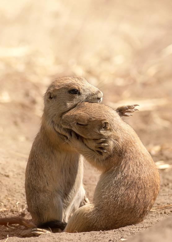 A hug - Sometimes we just need a hug