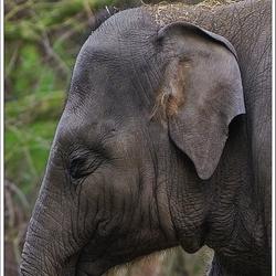 olifant in Blijdorp