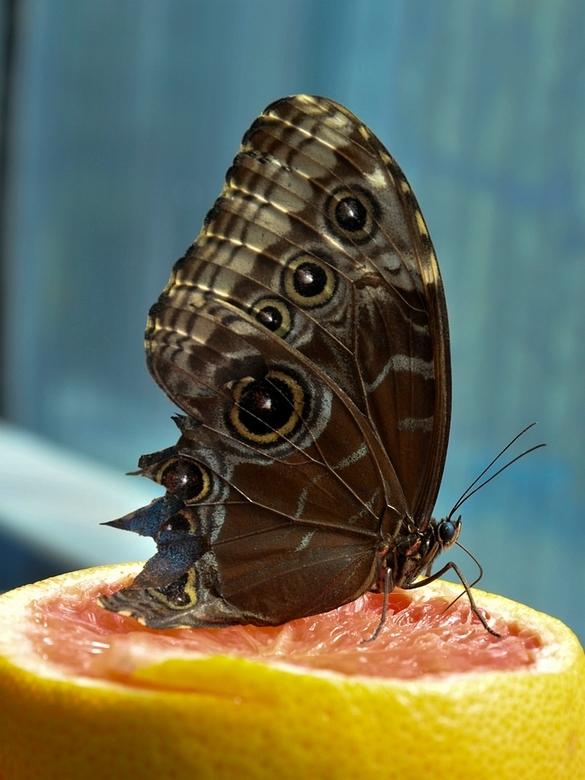 Vlindersnoepgoed -
