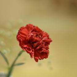 turkse bloem