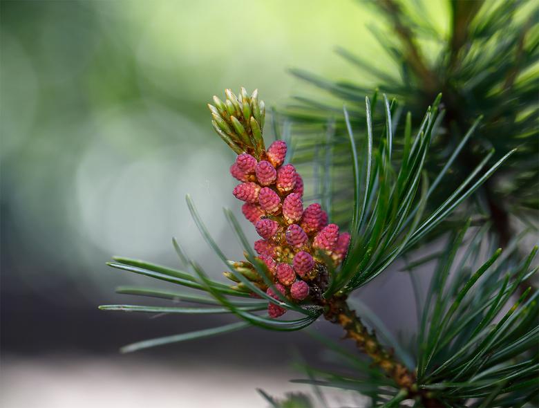 Pinus - Dank je wel voor alle reactie,s op mijn vorige upload.........