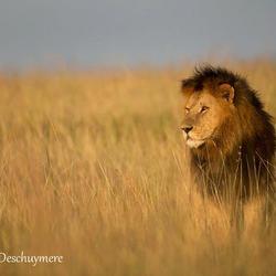 Prince of the Masai Mara