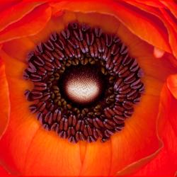 Rode Bloemenpracht