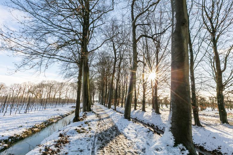 Let it snow! - Laatste dagje sneeuw, heerlijk zonnetje door de bomen.