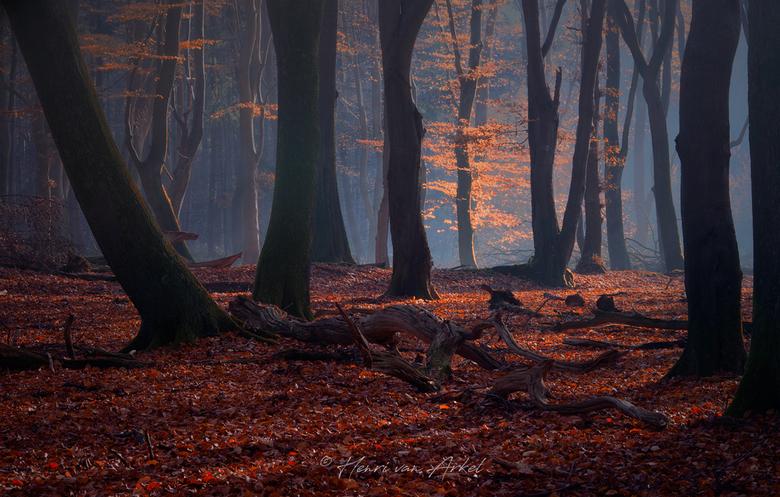Speulderbos - 17 november - Het was vroeg en koud vanochtend in het Speulderbos voor ochtendfotografie.