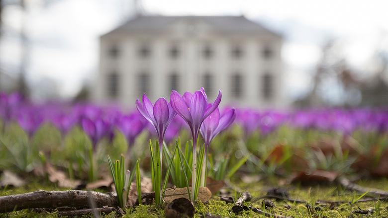 lente in het park