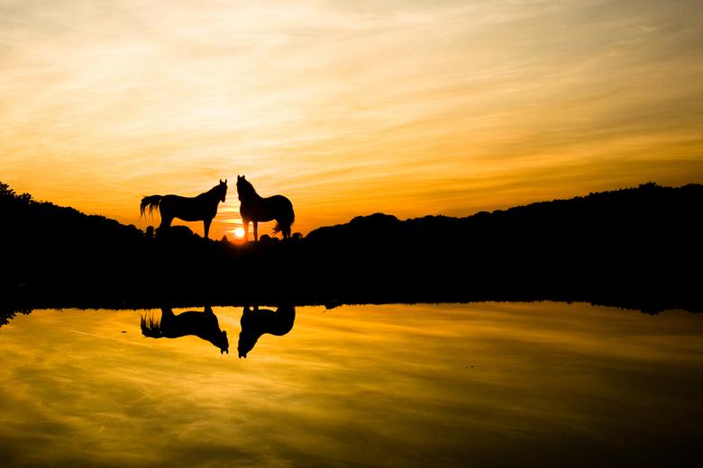 Paarden bij ondergaande zon Hilversum -