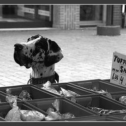 SNOEP DOGGY DOG