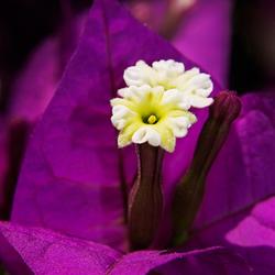 Mooie bloem op Kos