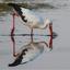 Spiegelsymmetrie