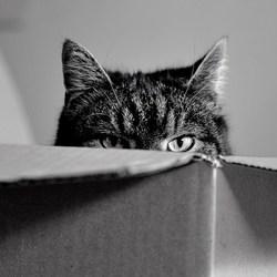de kat in de doos