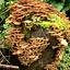 paddenstoelen slinger