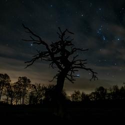 Gasterboom