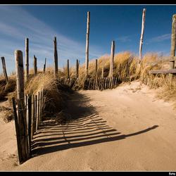 Texel; de duinen