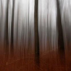 bewogen bomen II