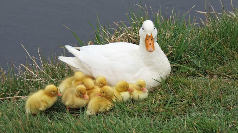vrolijke pasen !! - Net uit het ei ,genomen in Petten op een grijze 24 maart