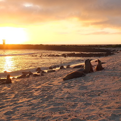 Zeeleeuwen in de avondzon Galapagos