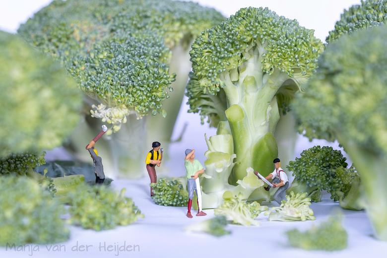 Broccoli salade - Voorbereiding voor de broccoli salade....