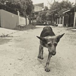 Down in the streets of Indonesia