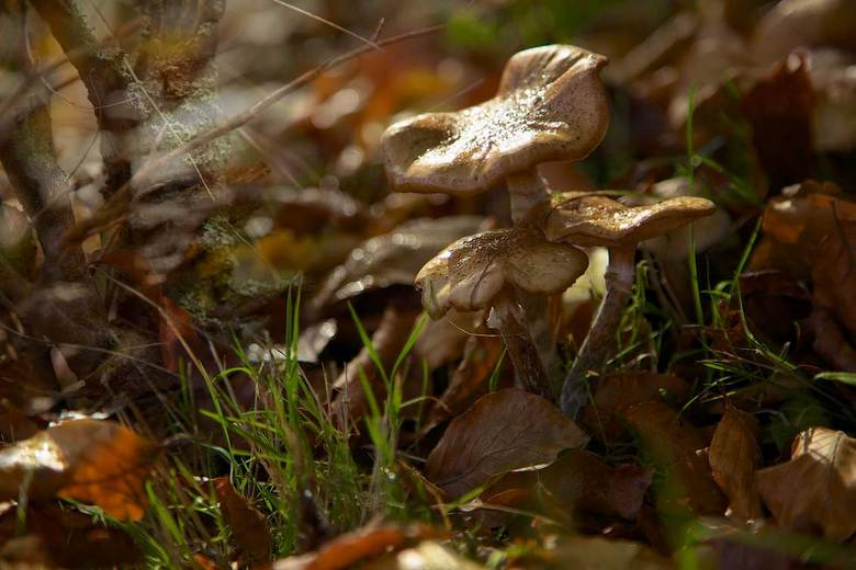 Autumn - Autumn1.jpg