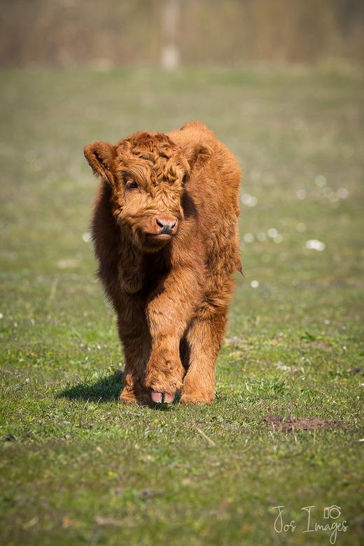 Koddig - Altijd leuk zo&#039;n jong dier met een hoog aaibaarheidfactor. <br /> Deze had (gelukkig voor de foto) nog geen oormerk.<br /> Groet,<br /