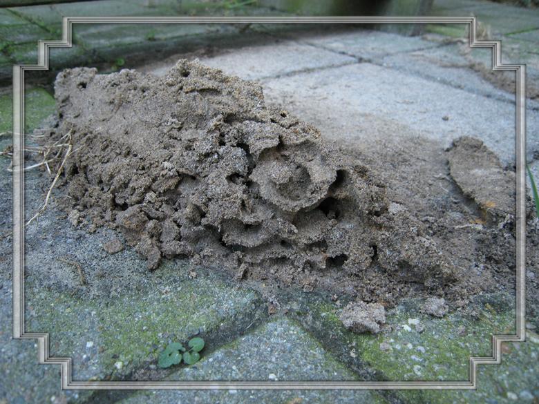 Mierenhoop - Wat kleine dieren in de natuur allemaal kunnen bouwen, daar sta je versteld van.<br /> Wij hebben zo&#039;n buiten kachel en daar hadden