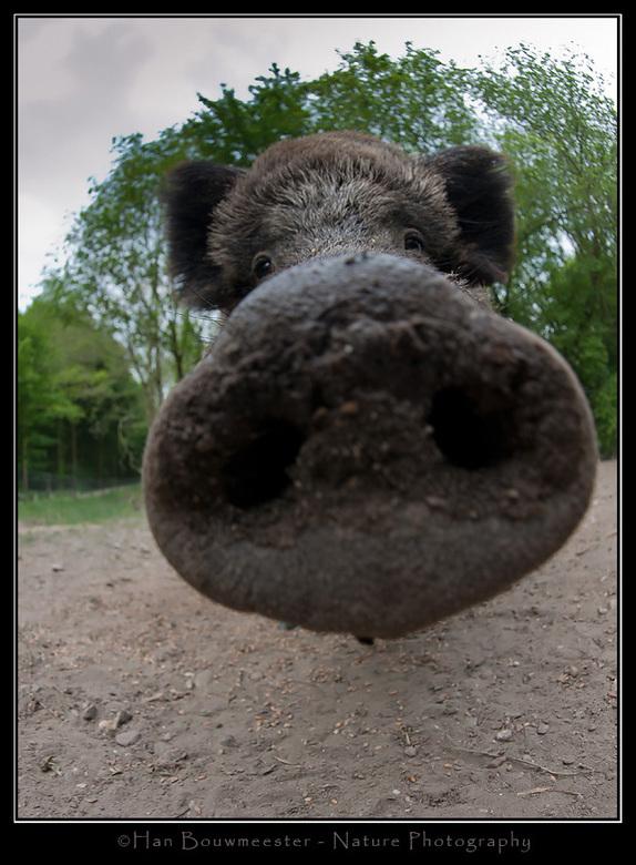 Met de neus vooraan staan - Hoe moet ik deze foto anders noemen? Gemaakt tijdens een workshop in Natuurpark Lelystad.<br /> <br /> Nikon D700; Nikon