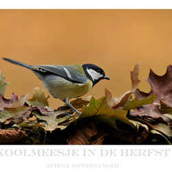 koolmeesje in de herfst
