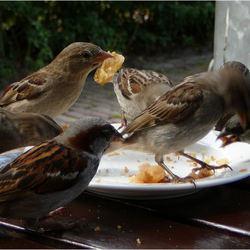 samen uit een bordje eten...