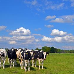 Typisch hollands landschap