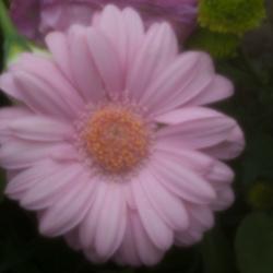 Pinhole flower