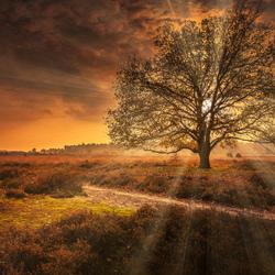Zonsondergang staatsebossen