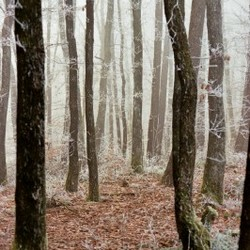rijp in het bos