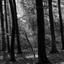 Schaep en Burgh, 's Graveland