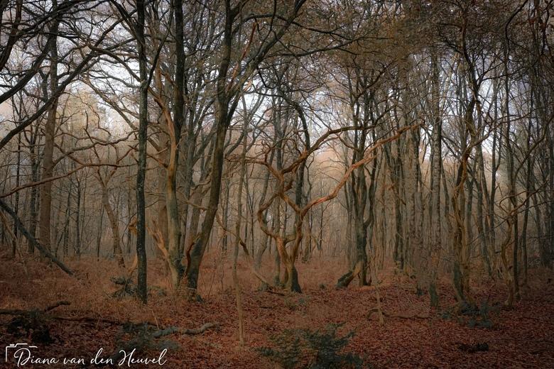 landgoed oud Groevenbeek  - Wat was het heerlijk om te wandelen vandaag landgoed oud Groevenbeek in Ermelo